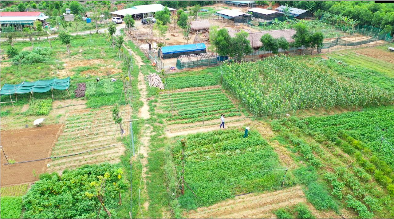 Một góc nông trại tại xã Hòa Phú, huyện Hòa Vang, TP. Đà Nẵng nhìn từ trên cao. Đây là nông trại cung cấp các thực phẩm tươi sống hằng ngày đến các chuỗi cửa hàng thực phẩm An Phú Farm.