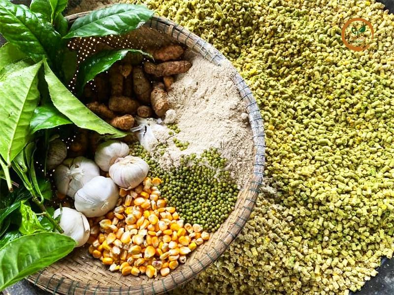 Các loại thảo mộc sẽ được xay nhuyễn và cho heo ăn vào buổi trưa, giúp tạo sức đề kháng lâu dài cho heo.