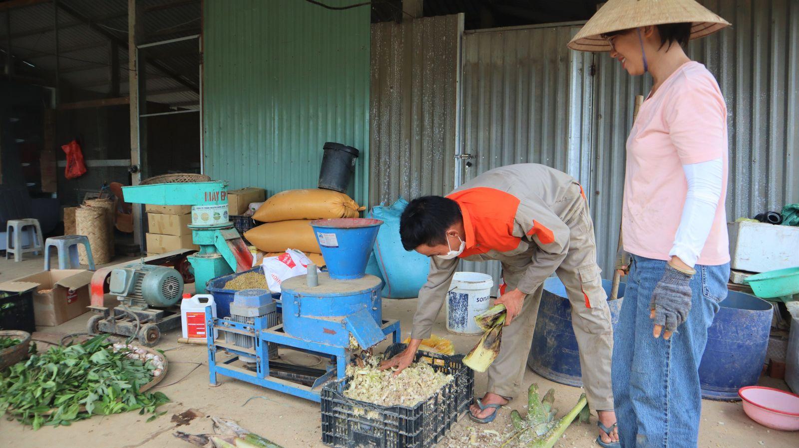 Thức ăn cho heo được thu hoạch ngay tại nông trại: cây chuối, lá chè, bắp… và mang đi xay liền để đảm bảo độ tươi ngon và giữ trọn được hàm lượng dinh dưỡng.