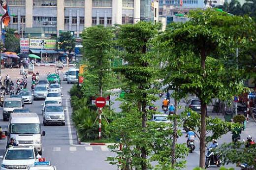 Hà Nội dự kiến trồng mới 200.000 - 250.000 cây xanh dịp đầu Xuân Tân Sửu 2021