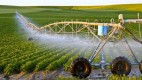 Bài toán vay vốn phát triển nông nghiệp: Khó ở chỗ nào?
