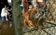Buôn lậu động vật hoang dã tại Việt Nam vẫn diễn ra rất