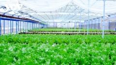 Đầu tư 260 tỉ đồng phát triển nông nghiệp hữu cơ