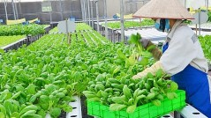 Hà Nội công bố thủ tục hành chính sản phẩm, hàng hóa thuộc lĩnh vực nông nghiệp