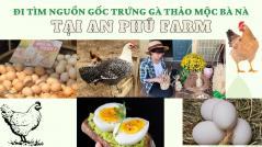 Đi tìm nguồn gốc trứng gà thảo mộc tại An Phú Farm