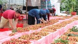 Thử nghiệm tiêu thụ nông sản trên nền tảng Grab