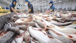 Xuất khẩu cá tra sang EU giảm mạnh trong 5 tháng đầu năm