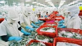 Quy chế xử phạt khắt khe, doanh nghiệp chế biến thủy sản rơi vào thế