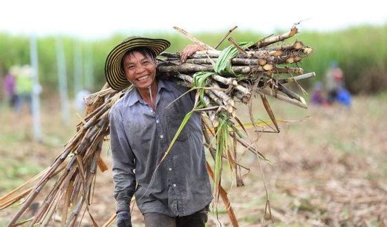 Áp thuế cao đối với mía đường Thái Lan, mía đường trong nước hưởng lợi thế nào?